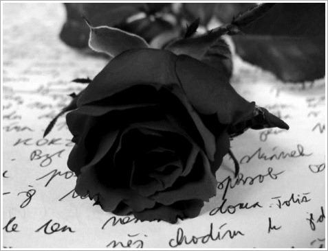 blackrosen
