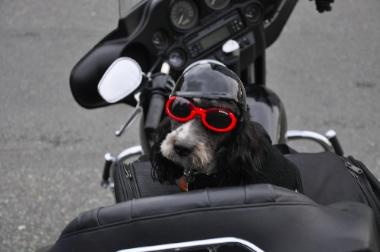Gilbert biker2