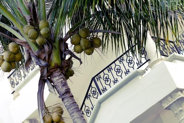 [palmtree[4].jpg]