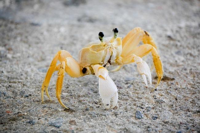 Crab on La Orchilla