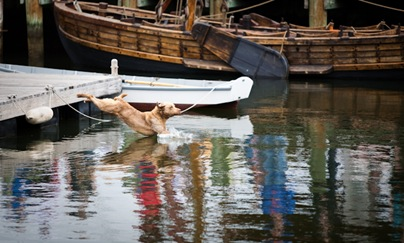 Retriever at Maritime Museum - 2