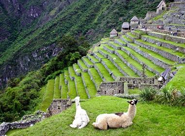 Machu Pichu - 34