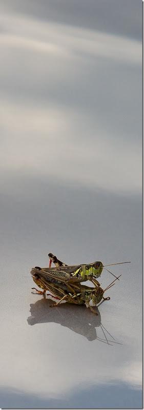 Insect Porno