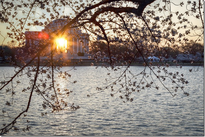 Cherry Blossoms with Sunrise through the Jefferson Memorial-1
