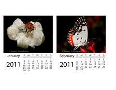 2011-01-03_120949