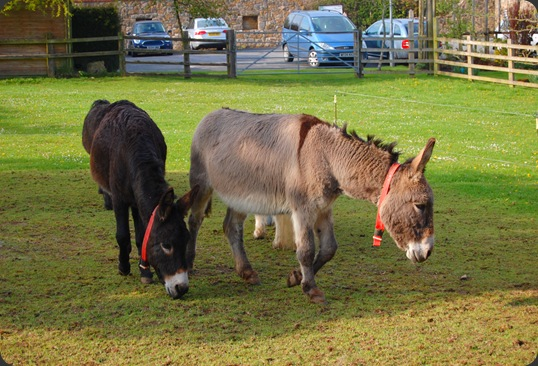 Donkey Sanctuary, Sidmouth. 06/05/2010