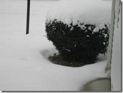 snow2 003