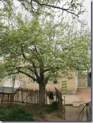 peer_tree