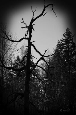 HauntedTree-BWBurn.jpg