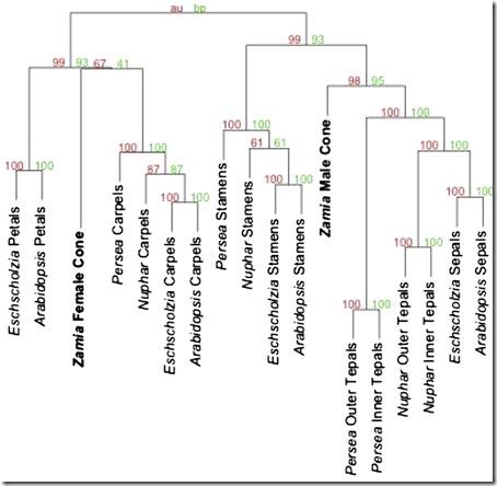 phylogeny1