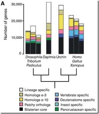 daphnia_genome