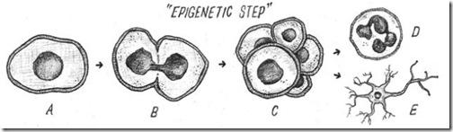 epigenetic_step