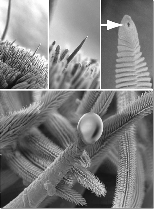 tarantula-espitas