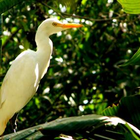 by Amal Vs - Animals Birds ( field, bird, green, white, birds )