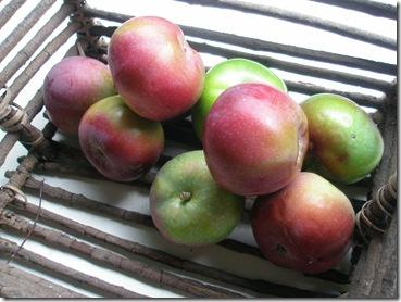 apples 006