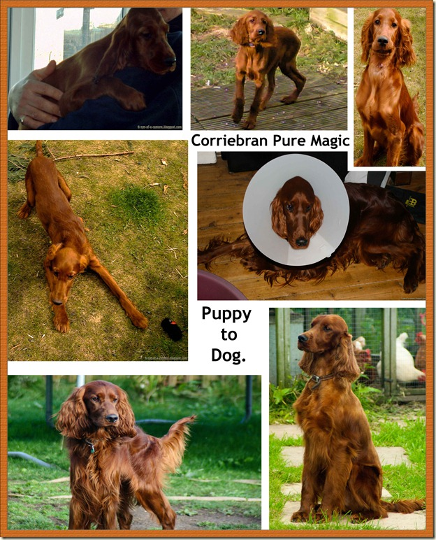 corky photo essay
