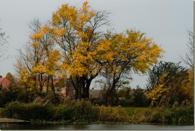 Autumn-1-5
