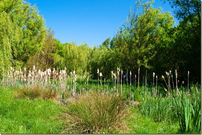 reeds-1