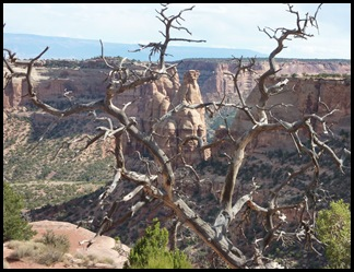 Colorado Nat'l Monument Dead Tree View