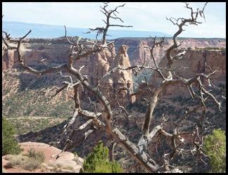 Colorado Nat'l Monument Dead Tree View