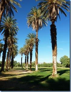 Death Valley Nat'l Park Date Palm Trees