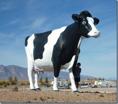 Longstreet Casino Cow