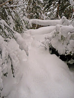 Mt Giant, Roaring Brook 3642.JPG Photo