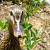 Trusting duck