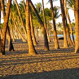 A-Bay palms