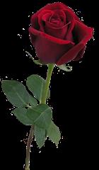 ROSAS_LADY_MEL (20)