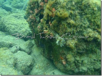 angra dos reis rio de janeiro corais
