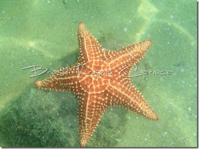 angra dos reis rio de janeiro estrela do mar