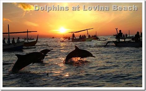 lovina-sunrise-dolphin