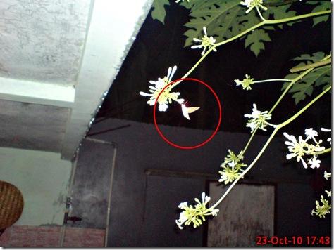 ngengat aktif di sore dan pagi hari 02