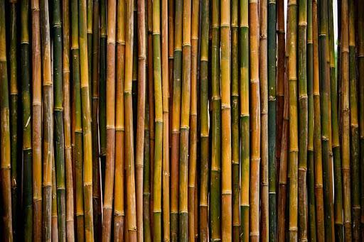 Bambusstangen, Bambushalme