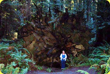 Redwoods(9)