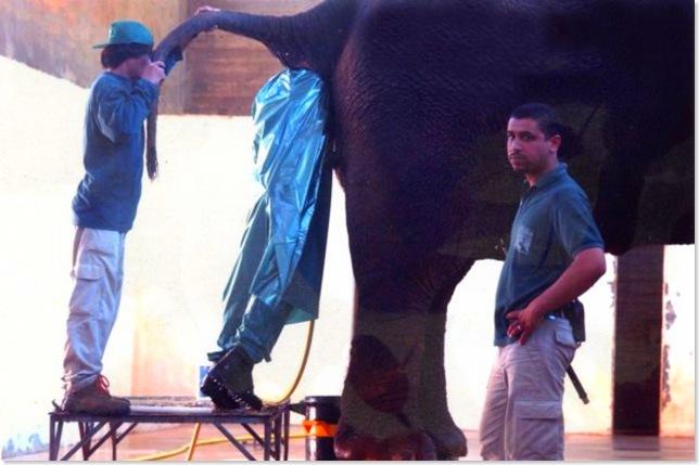 elephantcleaner