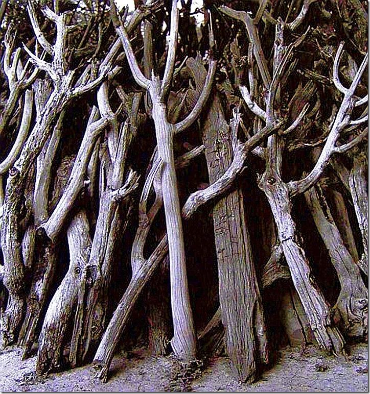 Cactus Wood — Horst Friedrichs, undated