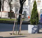 Zieleń na Piotrkowskiej