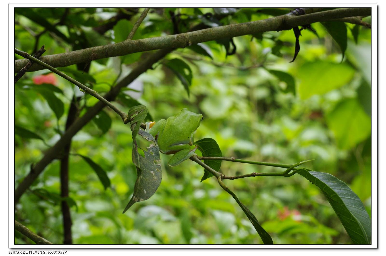 2010-07-24-富陽公園蛙出運啦