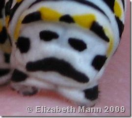 black swallowtail smiling face