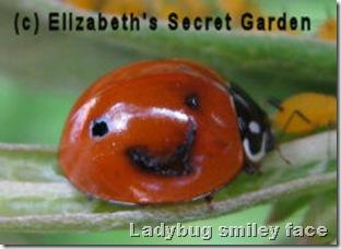 ladybug smiling Facebook