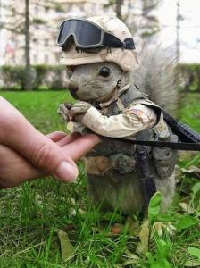 gi_squirrel.thumbnail.jpg
