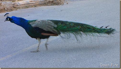 birding with pat_079