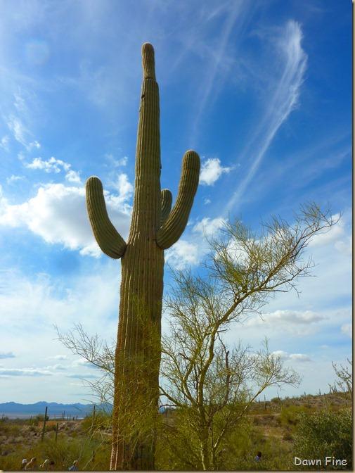 Desert museum_155