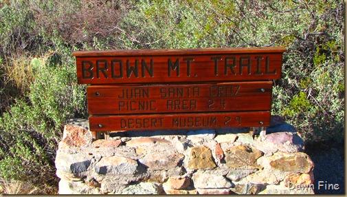 brown mt hike_003