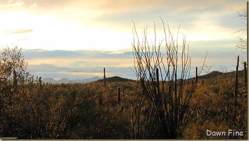 rainbow desert_025