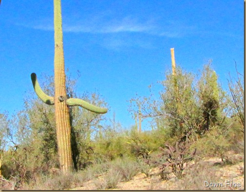 Sonoran NP west_029