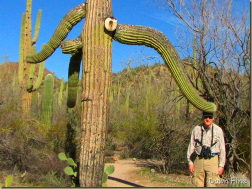 Sonoran NP west_042