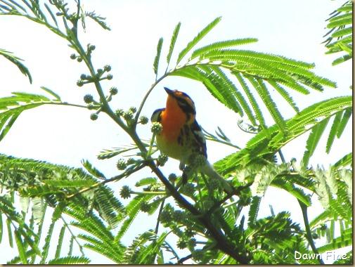 FALLOUT BIRDING_075